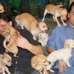 Sepolti in casa - animali