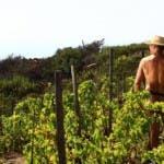Un'Insolita Vendemmia - Roberto Alpi nudo