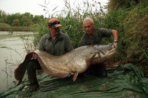 River Monsters - Discovery
