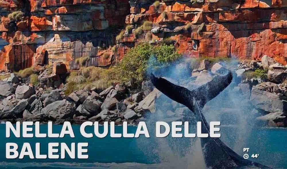 Nella culla delle balene