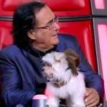 Albano, The Voice
