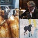 Riccanza, vita da cani - Lou Lou