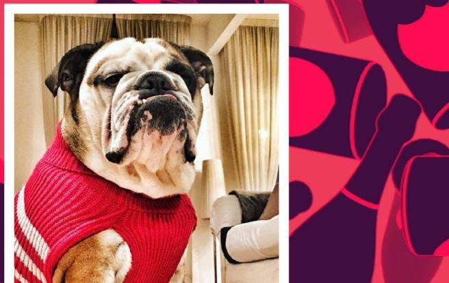 Riccanza Vita Da Cani Ecco I Rich Dogs Di Mtv Davidemaggioit