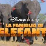 La Famiglia di Elefanti, Disney Plus