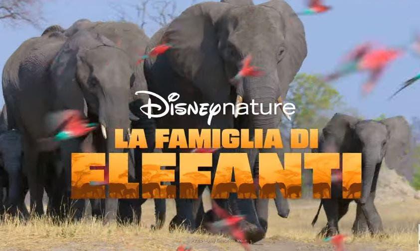 La Famiglia di Elefanti: su Disney+ arriva il docufilm con l